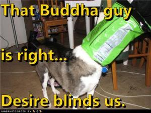funny-dog-pictures-that-buddha-guy-is-right-desire-blinds-us