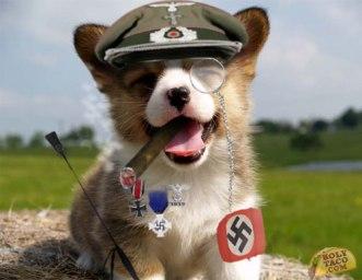 nazidog